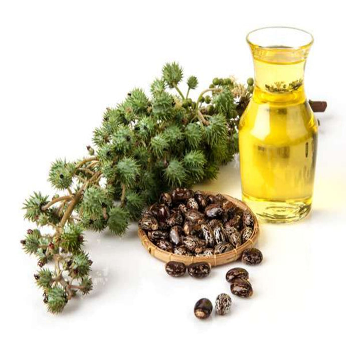 Buy Castor Carrier Oil Online in India - The Art Connect