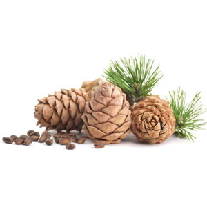 Buy Cedarwood (Indian) Essential Oil Online in India - The Art Connect