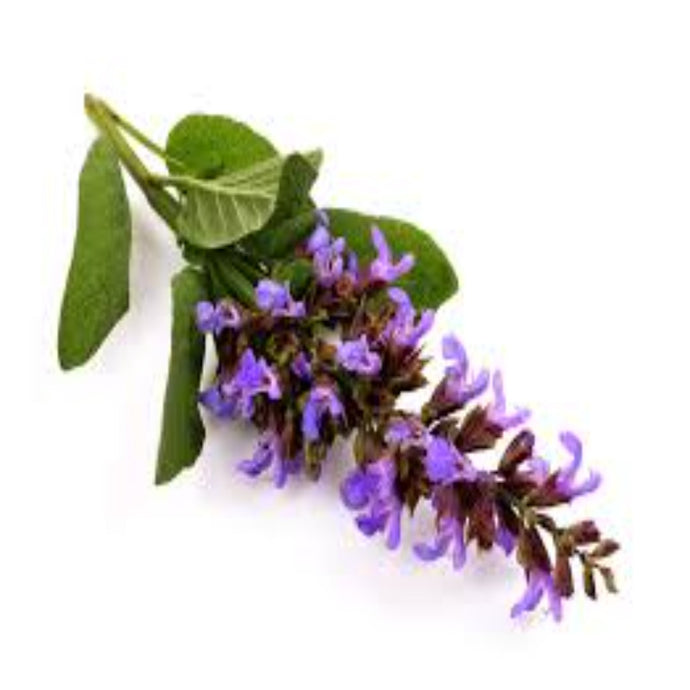 Buy Clary Sage Essential Oil Online in India - The Art Connect