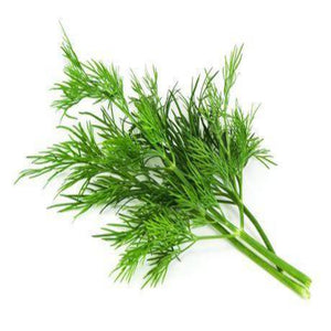 Buy Dill Essential Oil Online in India - The Art Connect