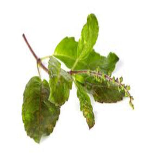 Buy Holy Basil Essential Oil Online in India - The Art Connect