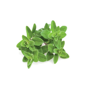 Buy Marjoram Essential Oil Online in India - The Art Connect