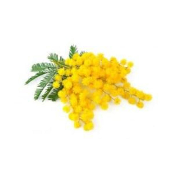 Buy Mimosa Wax Blocks Online in India - The Art Connect