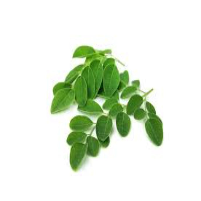 Buy Moringa Leaf Extract Online in India - The Art Connect
