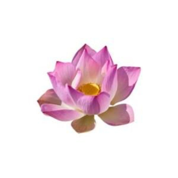 Buy Pink Lotus Wax Online in India - The Art Connect