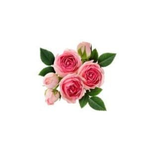 Buy Rose Wax Online in India - The Art Connect