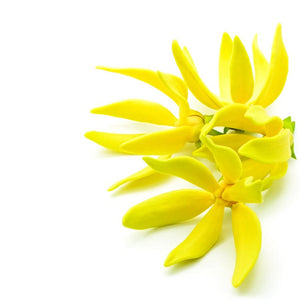 Buy Ylang Ylang Essential Oil Online in India - The Art Connect