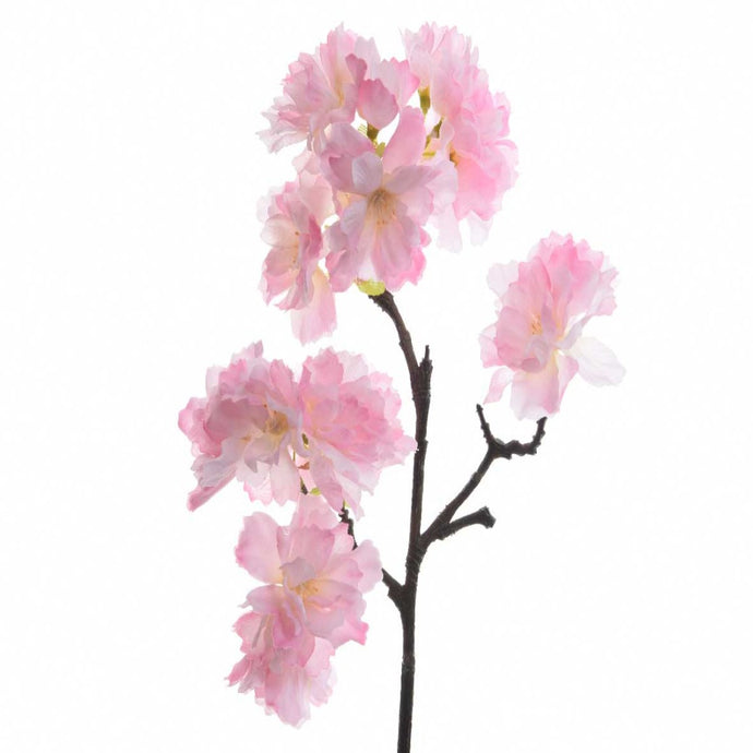 Cherry Blossom Fragrance Oil - Buy Cosmetic & Candle Fragrances / Scents / Perfumes Online in India - The Art Connect
