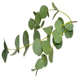 Fern Eucalyptus Fragrance Oil - Buy Cosmetic & Candle Fragrances / Scents / Perfumes Online in India - The Art Connect