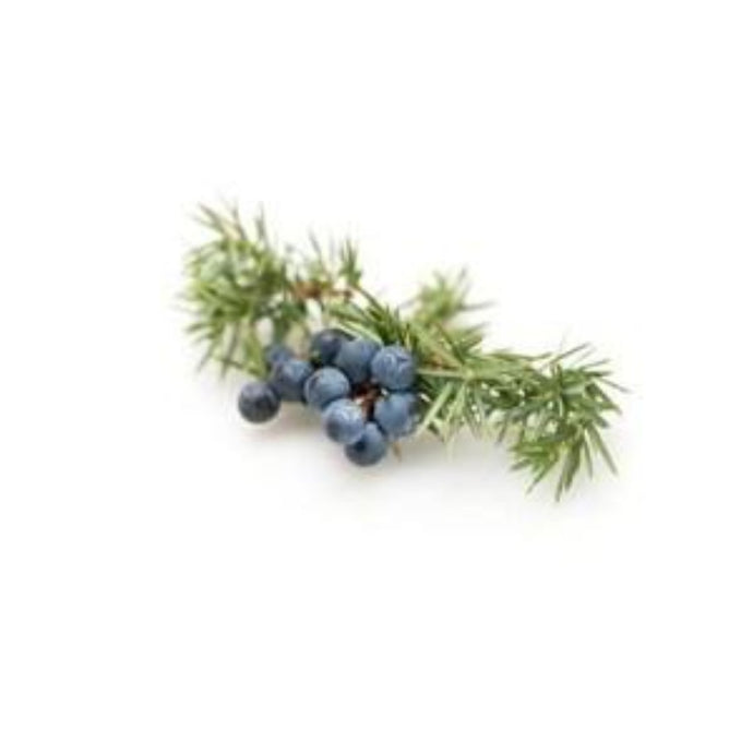 Frosted Juniper Fragrance Oil - Buy Cosmetic & Candle Fragrances / Scents / Perfumes Online in India - The Art Connect