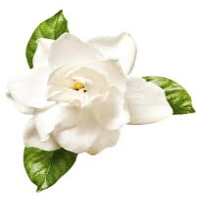 Gardenia Fragrance Oil - Buy Cosmetic & Candle Fragrances / Scents / Perfumes Online in India - The Art Connect