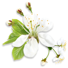 Load image into Gallery viewer, Neroli Fragrance Oil - Buy Cosmetic & Candle Fragrances / Scents / Perfumes