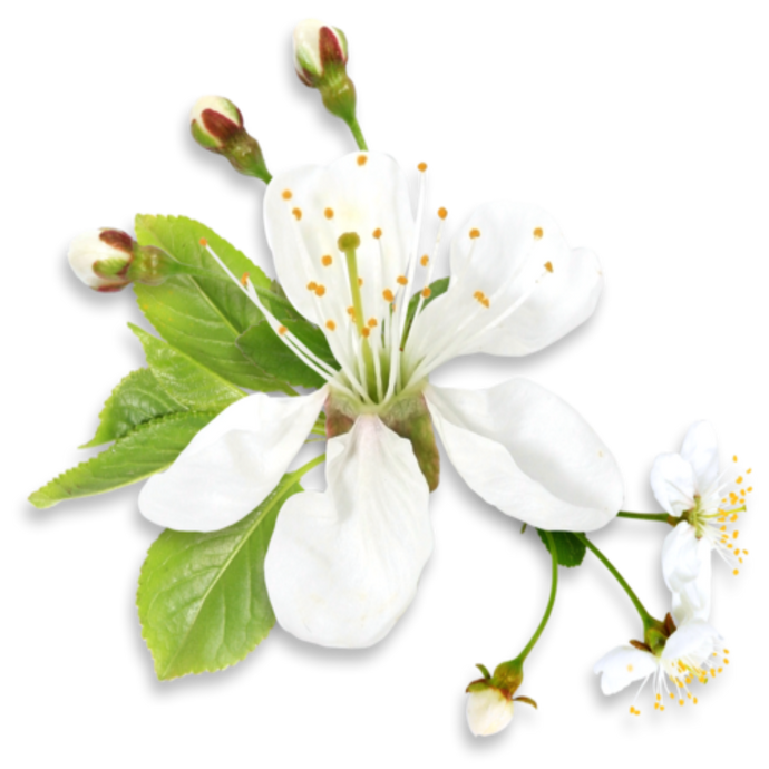 Neroli Fragrance Oil - Buy Cosmetic & Candle Fragrances / Scents / Perfumes