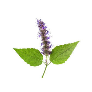 Patchouli Premium Fragrance Oil - Buy Cosmetic & Candle Fragrances / Scents / Perfumes