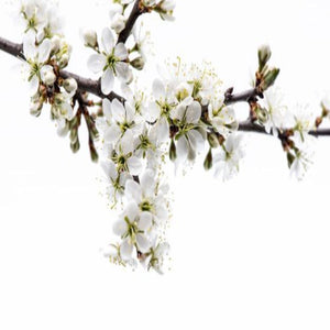 Spring Morning Fragrance Oil - Buy Cosmetic & Candle Fragrances / Scents / Perfumes