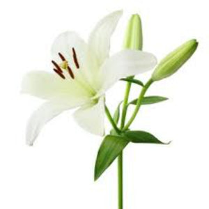 White Lily Fragrance Oil - Buy Cosmetic & Candle Fragrances / Scents / Perfumes