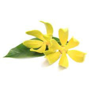 Ylang Ylang Fragrance Oil - Buy Cosmetic & Candle Fragrances / Scents / Perfumes