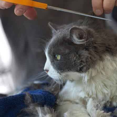 Cooling Cut for Kitty | PETS Magazine: Ask the Experts, by Desmond Chan