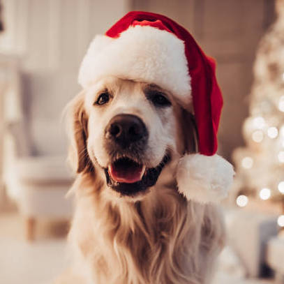 Conscious Gifting this Festive Season (Pets Edition)