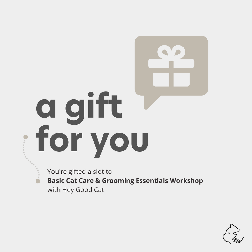 Gift A Workshop - Cat Edition