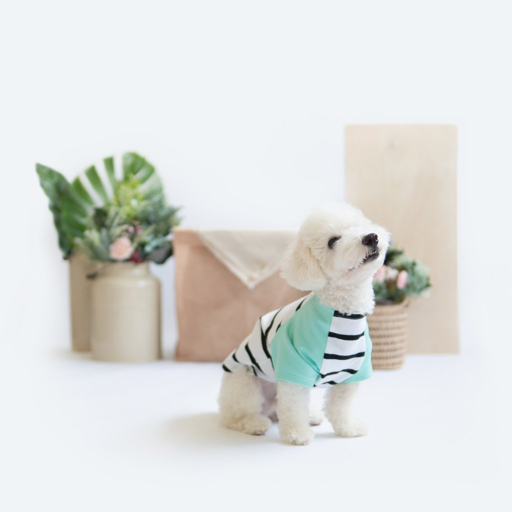 Ohpopdog Mint Striped Raglan