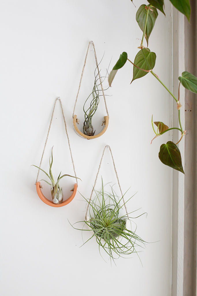 Air Plant Cradles