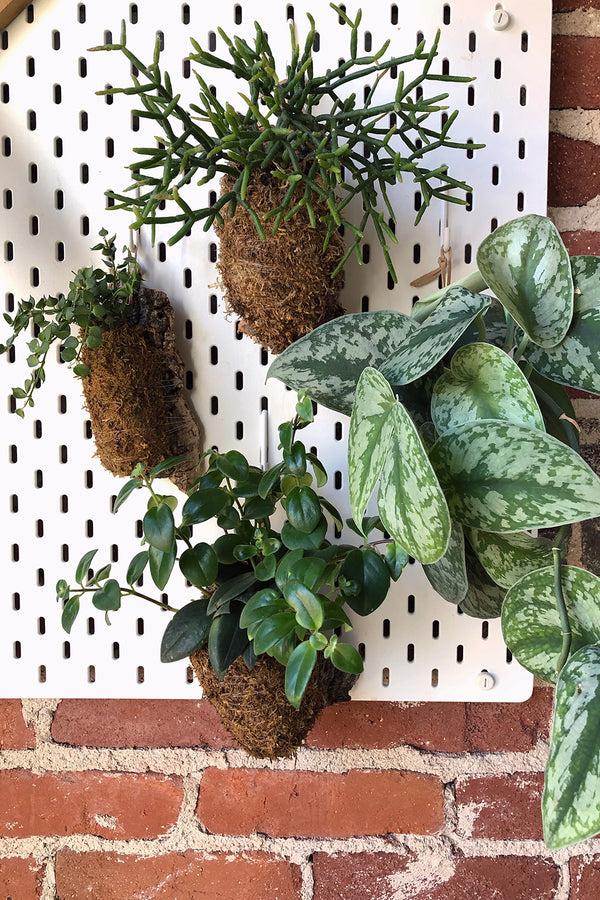Cork Mounted Plants Workshop
