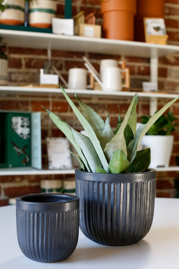 Black Ribbed Cylinder Planter
