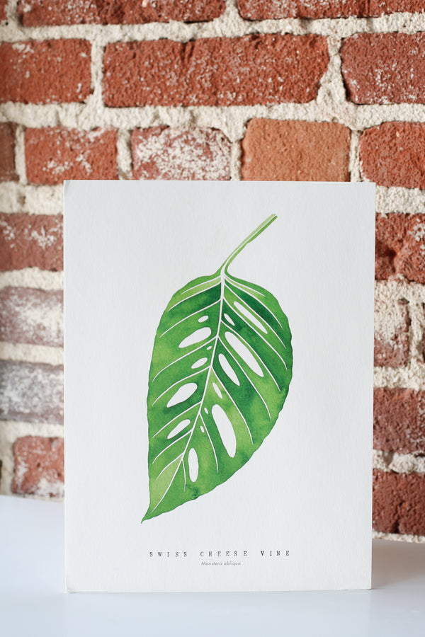 Monstera adansonii Print - SALE