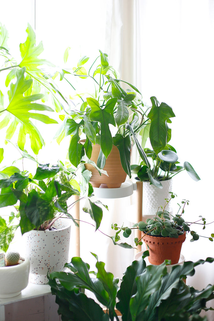 At Home with Houseplants at the LA County Arboretum