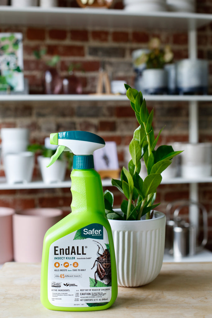 End All Insect Spray