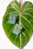 Philodendron gloriosum Stud Earrings