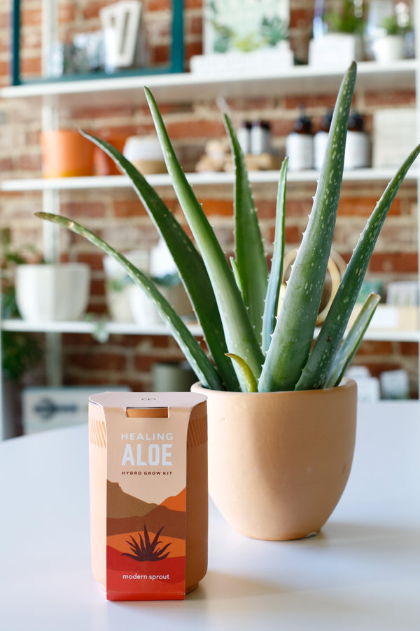 Aloe Grow Kit