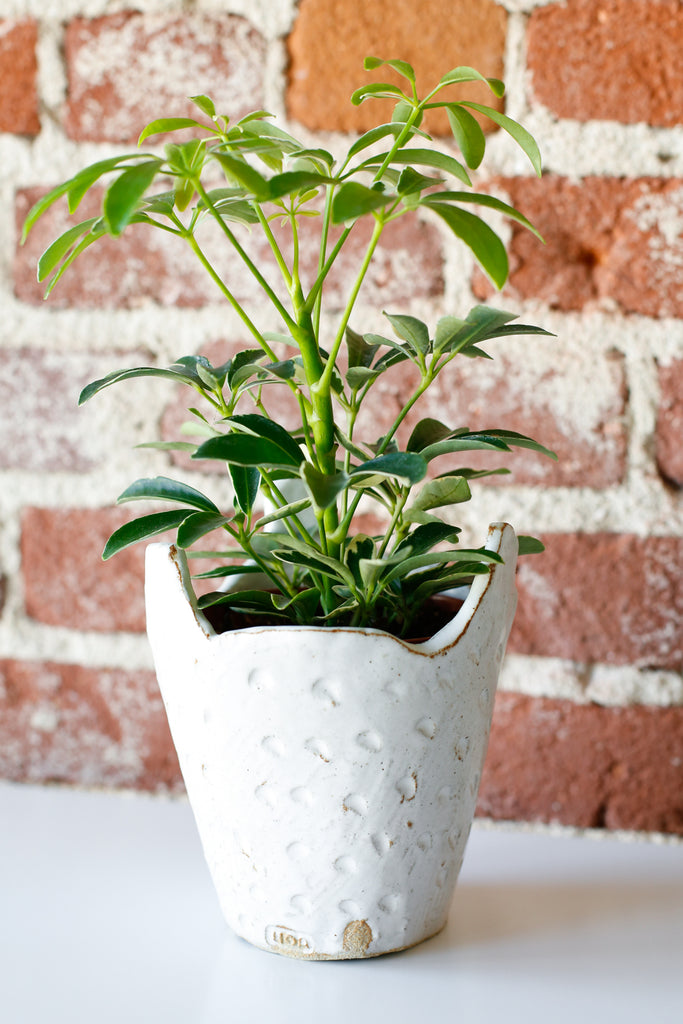 Yoko Iida Tri Point Planter- Dots