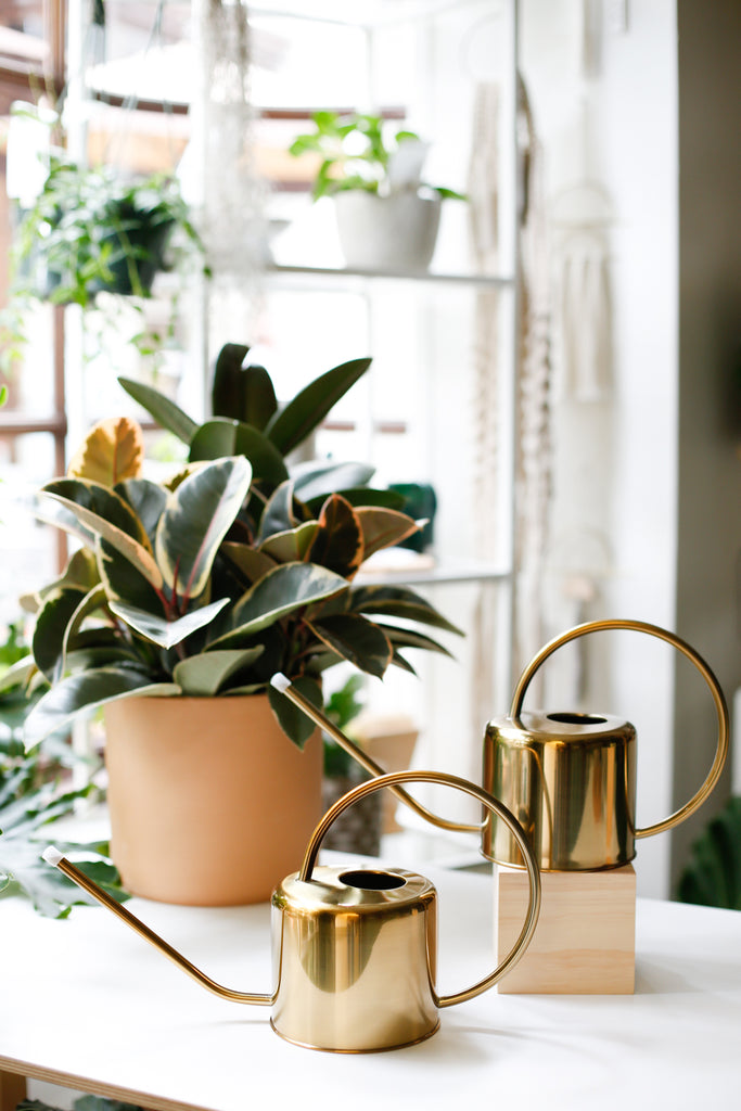 Golden Watering Can - SALE