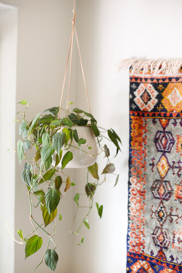 Indio Hanging Planter
