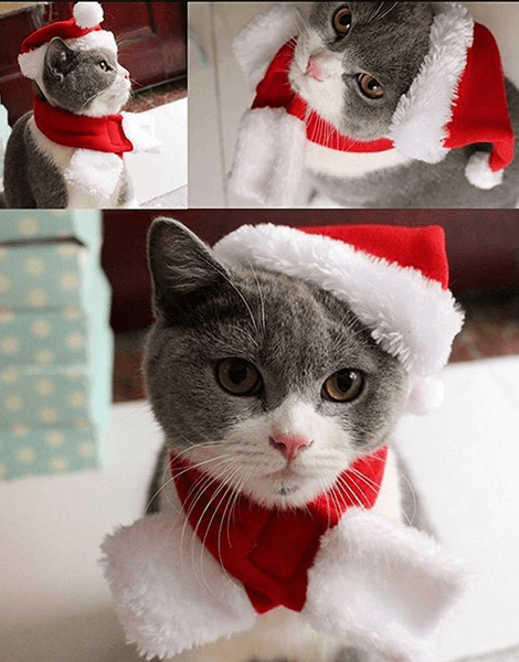 Christmas Cat Hat