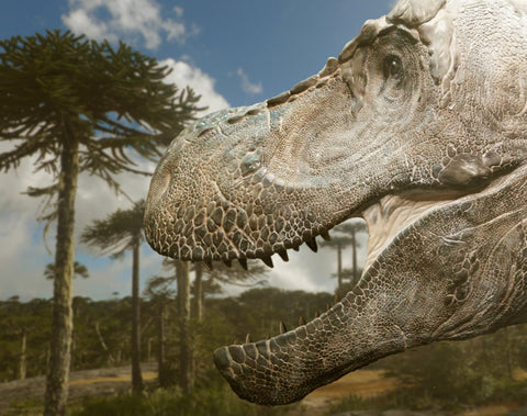 The New Face Of T Rex available from The Prehistoric Store