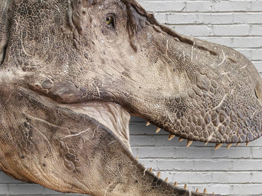 T rex with skin Replica Available from The Prehistoric Store