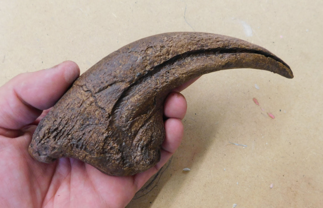 Allosaurus 'Thumb' Claw