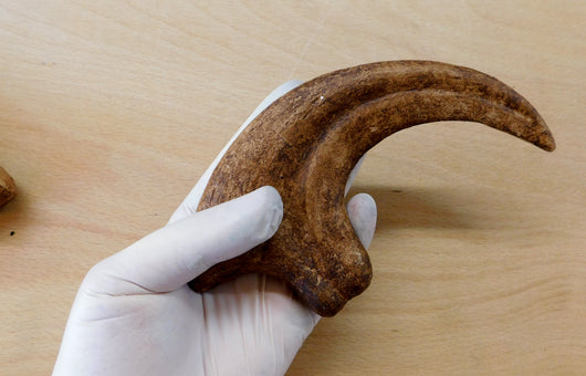 Dromaeosaur claw from The Prehistoric Store
