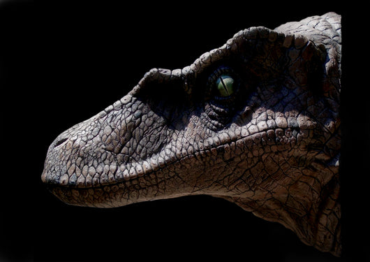 Deinonychus life sized Wall Mounted Head -Exclusive To Prehistoric