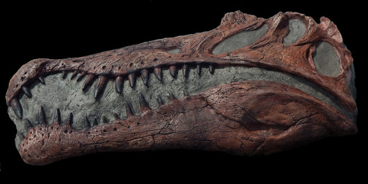 Spinosaurus Skull available from the Prehistoric Store