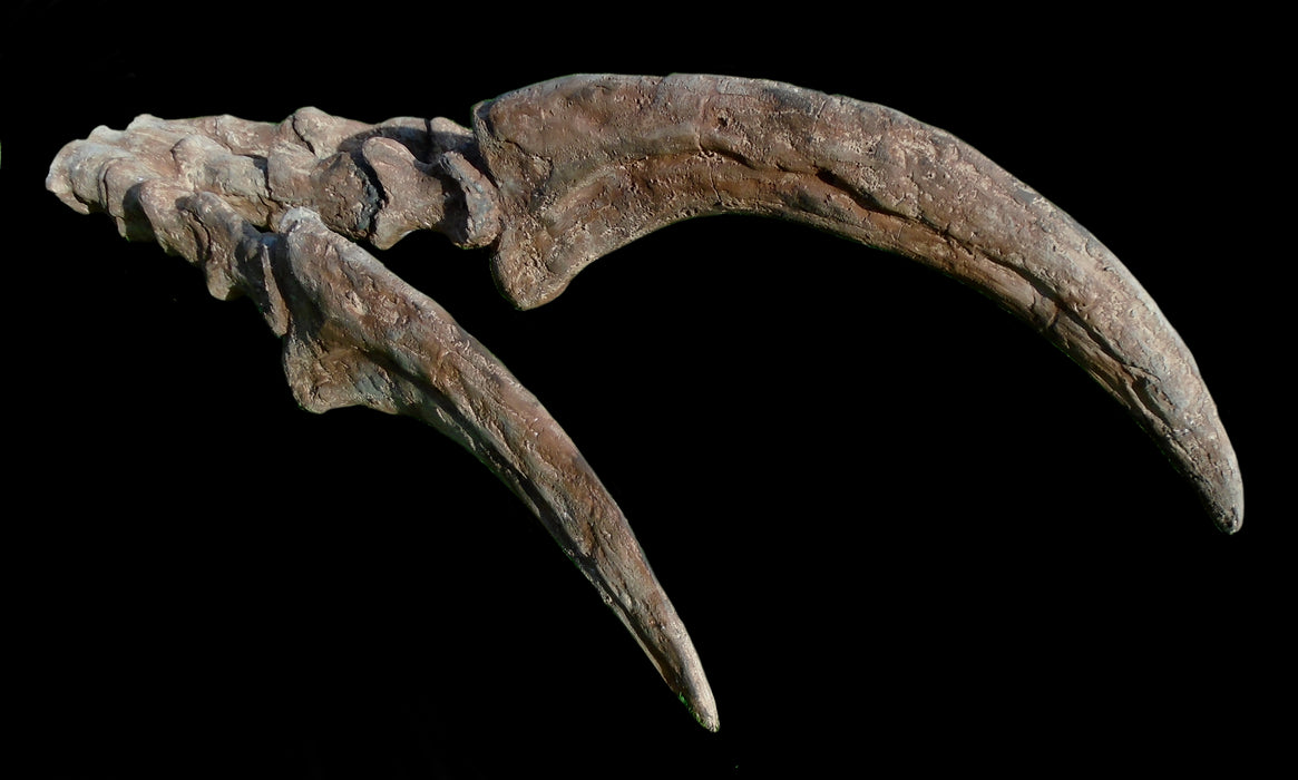 Therizinosaurus Life Sized Hand And Claws Replica From The Prehistoric Store