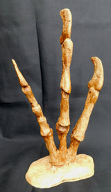 Utahraptor Fingers and Claws On Display Stand