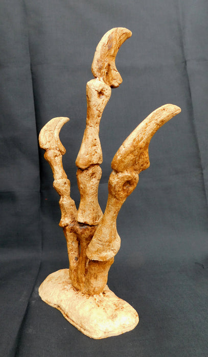 Utahraptor 'Hand' for sale at The Prehistoric Store