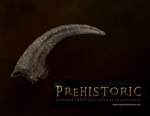 Velociraptor Killing Claw from the UK The Prehistoric Store