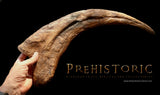 Therizinosaurus Claw from the Prehistoric Store