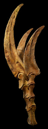 Therizinosaurus Fossilized Claws and Hand 4 foot Life Sized Replica