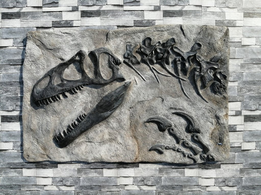 Allosaurus Wall Mountable Skull Replica From The Prehistoric Store